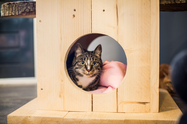 Kat aan het verstoppen in kattenpension Chateau Animaux