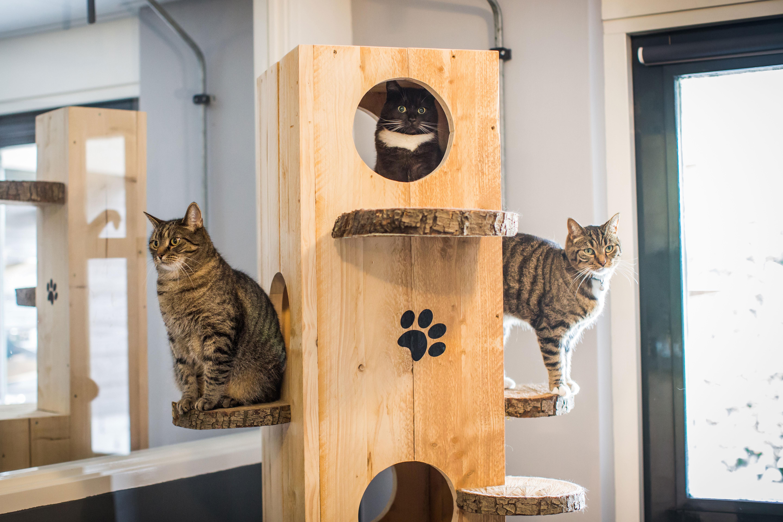 3 katten in een krabpaal van Chateau Animaux in Heeswijk-Dinther